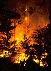 firehell_5march2002.jpg